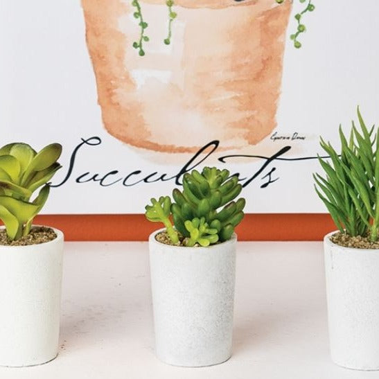 Mini Succulents - Set of 3