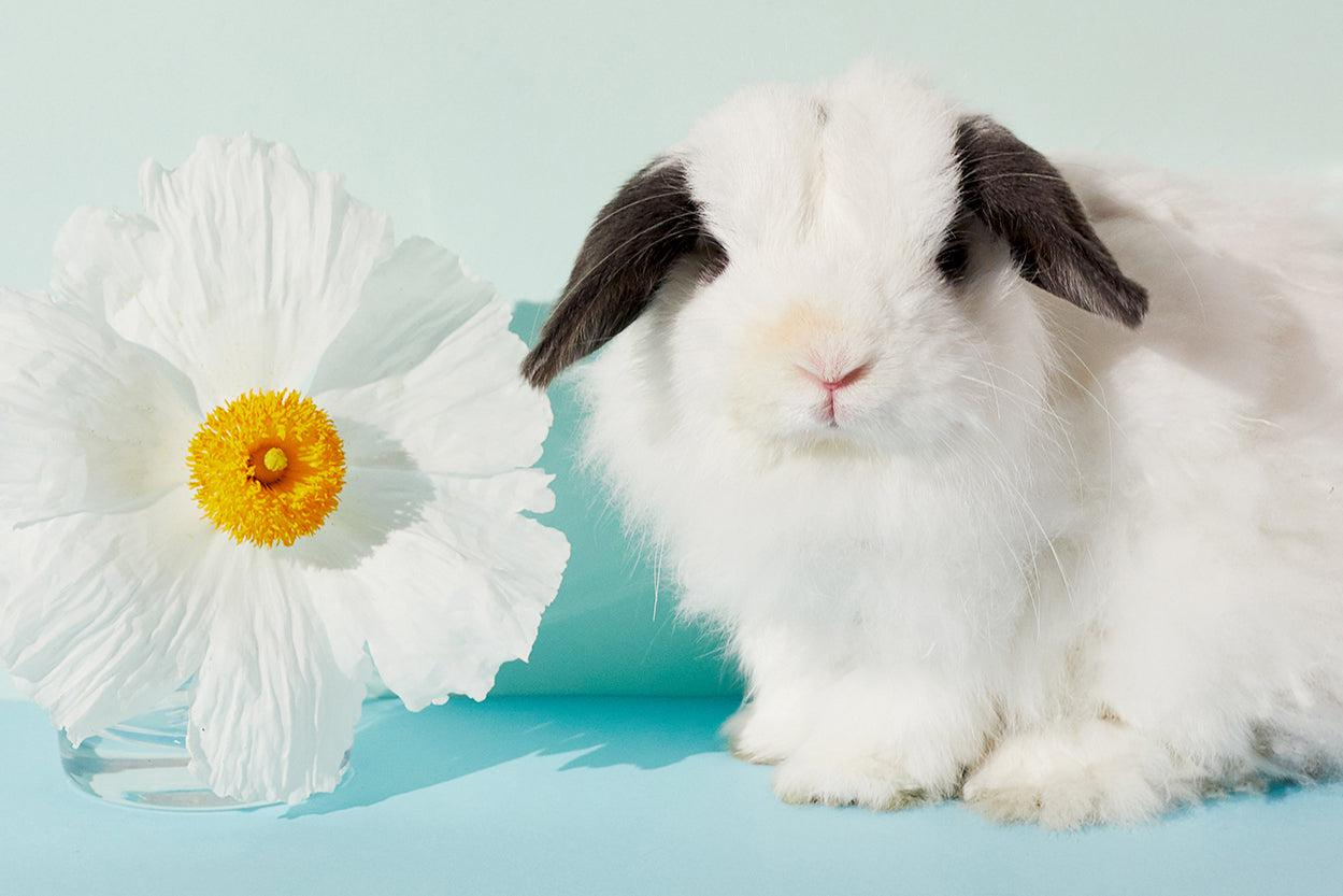 Cruelty free bunny with white flower