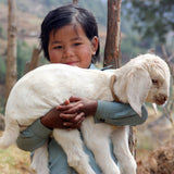 nepal girl with goat