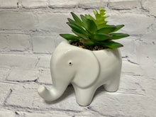 Load image into Gallery viewer, Artificial Succulent in CERAMIC ELEPHANT