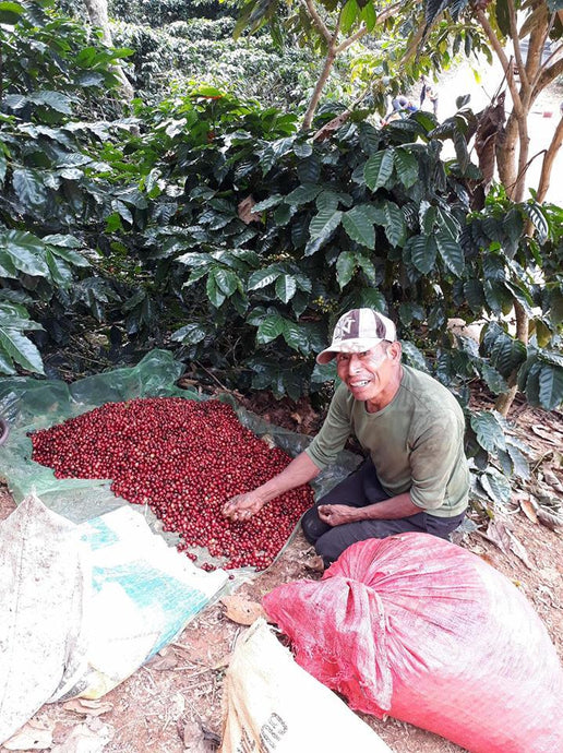 Coffee Growers Are More Important Than Coffee Makers