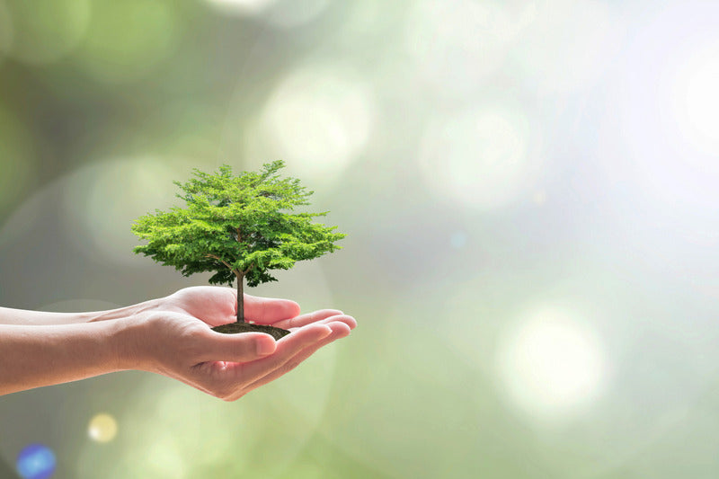 hands holding small tree for arbor day planting