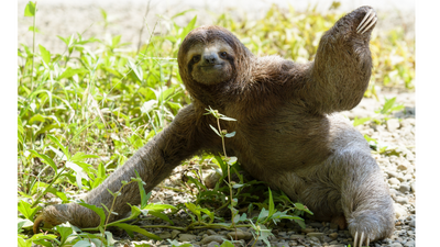 Go Slow and Celebrate the Sloth!