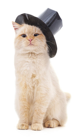 Cat in a tophat