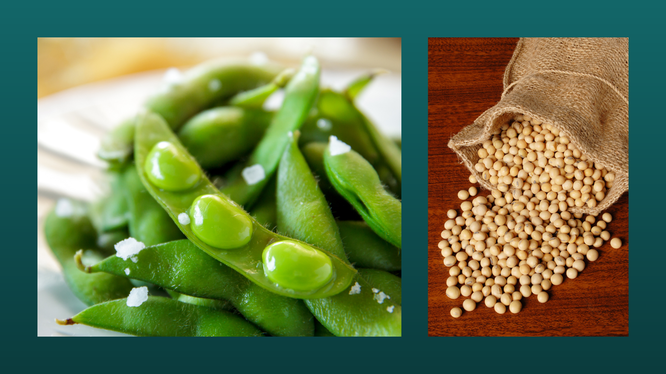 fresh soy beans and dried soy beans