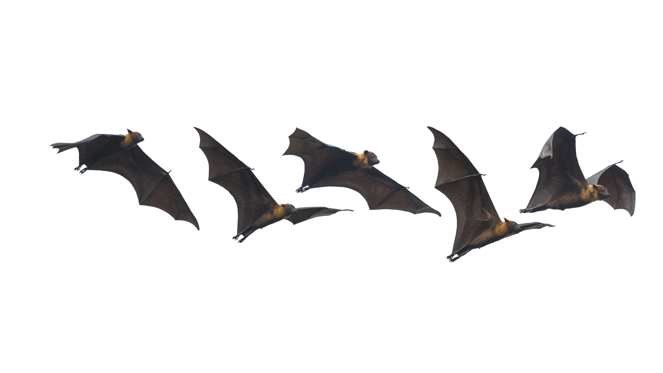 bats Halloween traditions