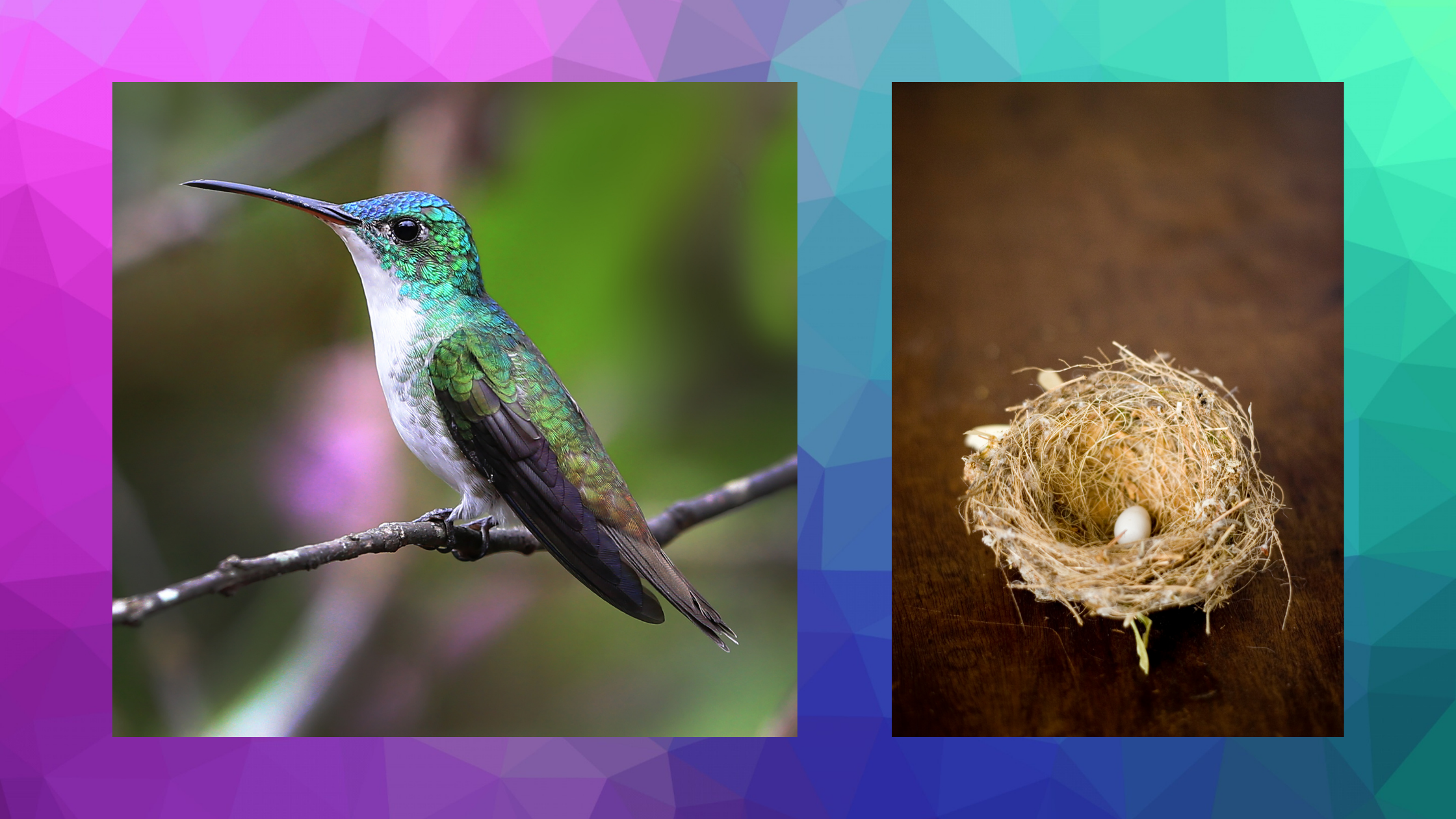 hummingbird and nest with tiny egg national egg day