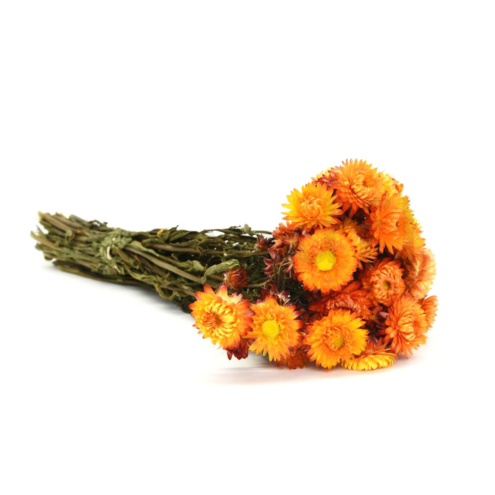 Helichrysum séché - Orange