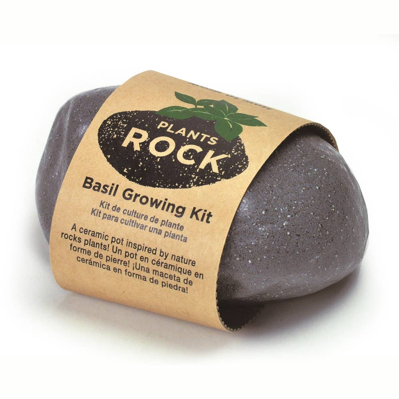 Plants Rock Gris - Basilic