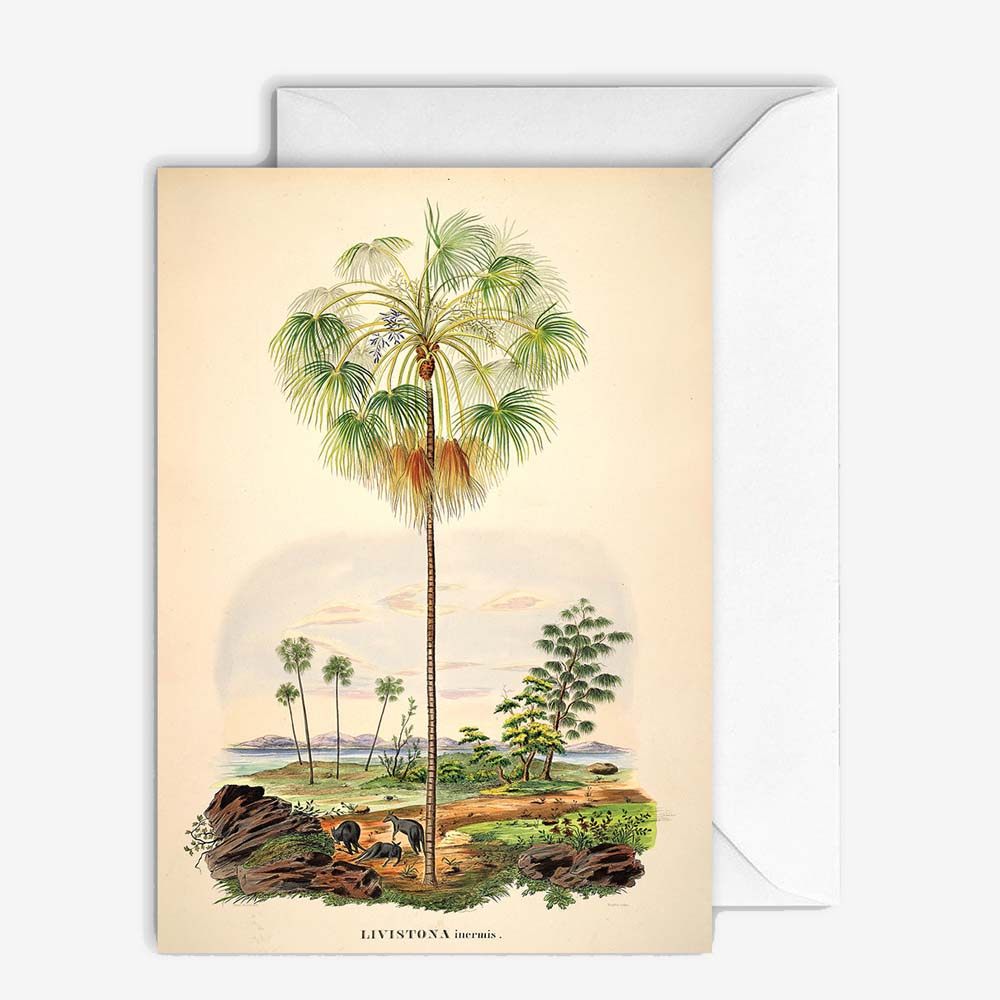 Carte de vœux - Palms scenery