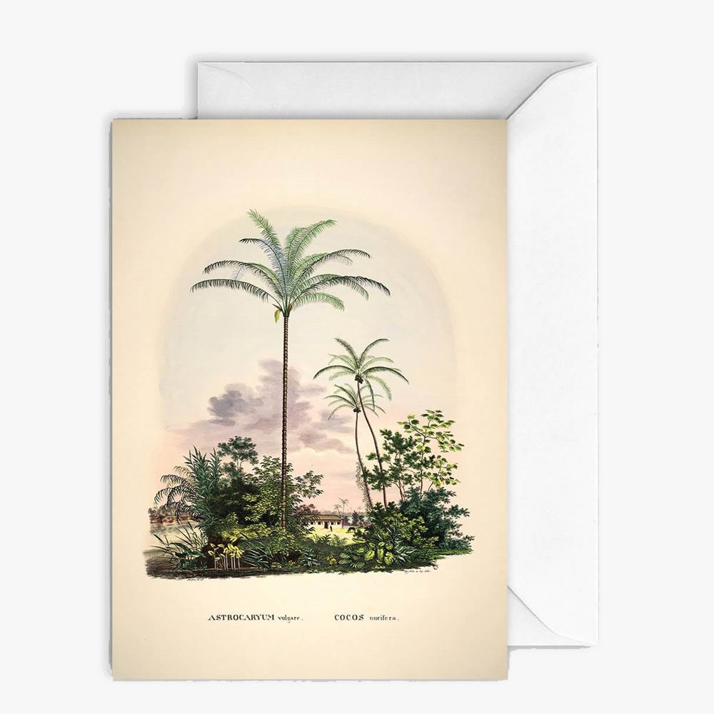 Carte de vœux - Palm scenery