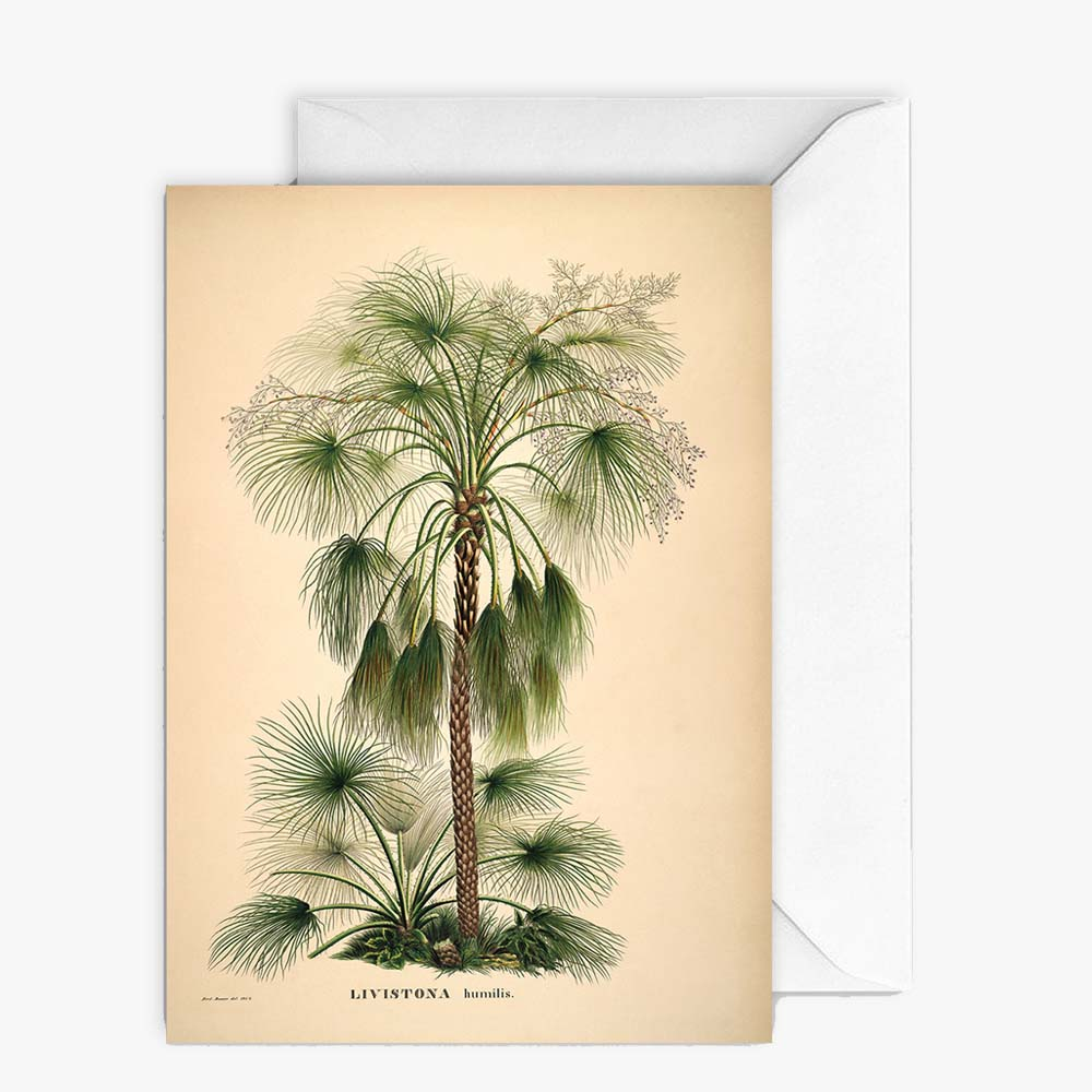 Carte de vœux - Palms