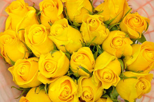 yellow roses miami