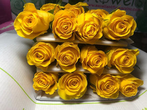 wholesale flowers miami