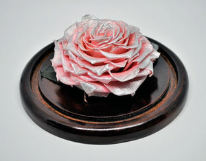 Jumbo Rose in a Small Dome