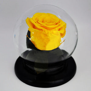 Preserved Medium Rose in a Dome