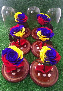 Tricolor Preserved Jumbo Rose in a Dome Colombian and Ecuadorian flag