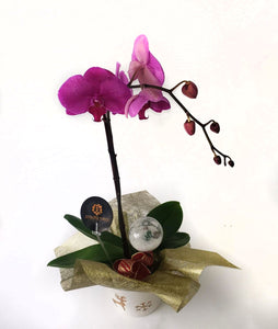 Purple Orchids on a wonderful vase