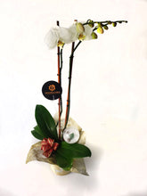 Load image into Gallery viewer, White Orchids on a wonderful vase