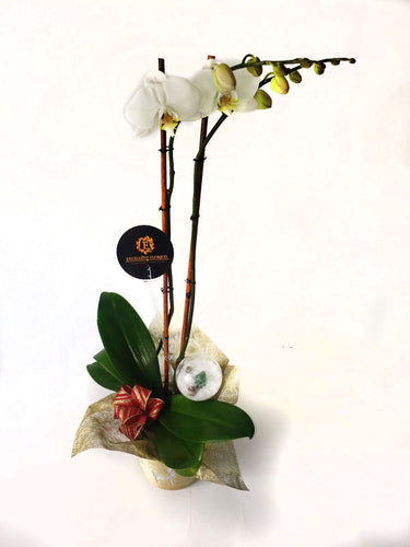 White Orchids on a wonderful vase