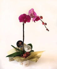 Load image into Gallery viewer, Pink Orchids on a wonderful vase