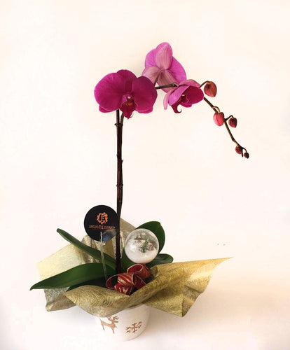 Pink Orchids on a wonderful vase