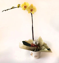 Load image into Gallery viewer, Yellow Orchids on a wonderful vase