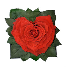 Load image into Gallery viewer, Bright Red Heart shape preserved rose