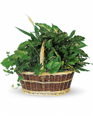 Large Basket Garden - Excellent Florists