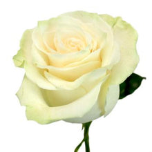 Load image into Gallery viewer, White / Cream  Rose I $ 19.99 * Bunch: 25 roses