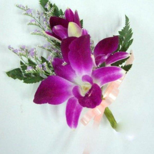 Dendrobium Orchid Purple - Excellent Florists