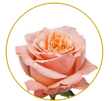 Load image into Gallery viewer, Shimmer rose