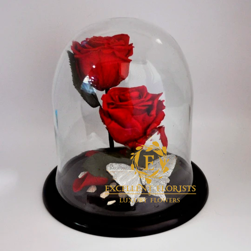 Two Preserved Large Red Bright Roses in a Dome