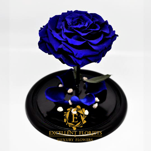 Preserved Jumbo Royal Blue Rose in a Medium Dome
