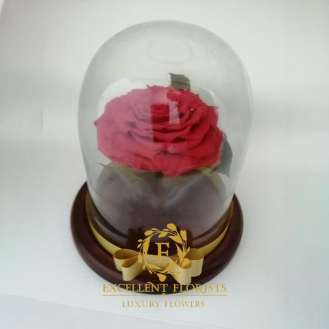 Preserved Jumbo Red Coral Rose in a Medium Dome