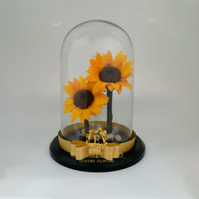 Load image into Gallery viewer, Two beautiful Preserved Large Sunflowers