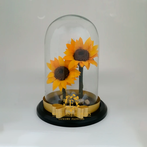Two beautiful Preserved Large Sunflowers