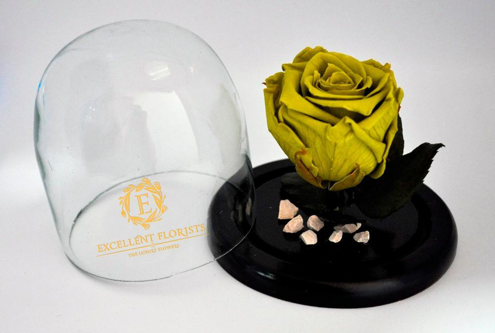Preserved Medium Rose in a Medium Dome