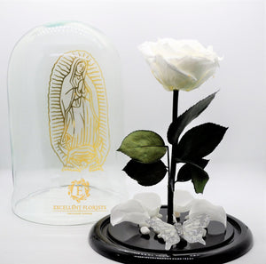 Guadalupe´s Rose in a Dome