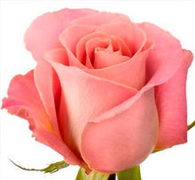 Load image into Gallery viewer, Hermosa roses