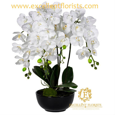Pure White Orchids on a wonderful vase
