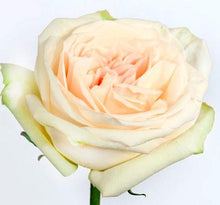 Load image into Gallery viewer, white garden rose