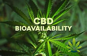 How to increase the bioavailability of CBD?