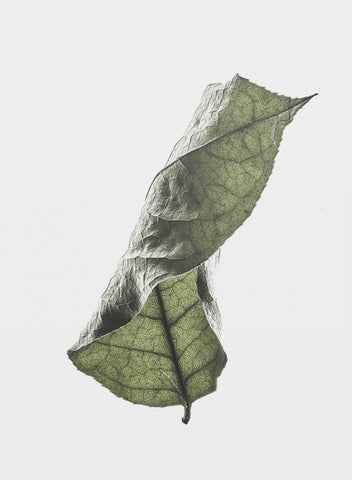 Floating Leaves 04
