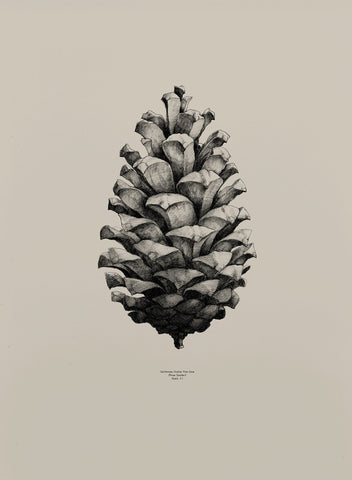 Pine Cone - Sand