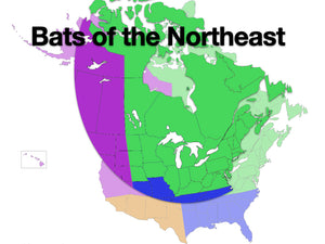 Online Class: Acoustic ID - Bats of the Northeastern U.S. & Eastern Canada