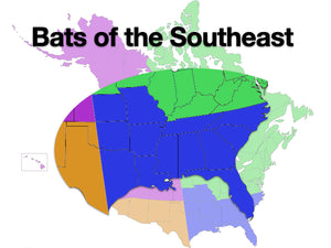 Online Class: Acoustic ID - Bats of the Southeastern U.S.