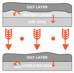 Illustration depicting the impact the order in which we apply product has on our skin and its moisture content.