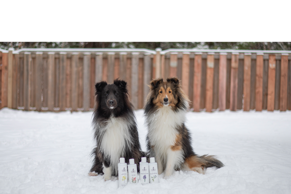 Using CBD Pet Shampoo to Boost Your Pet's Skin and Coat Health