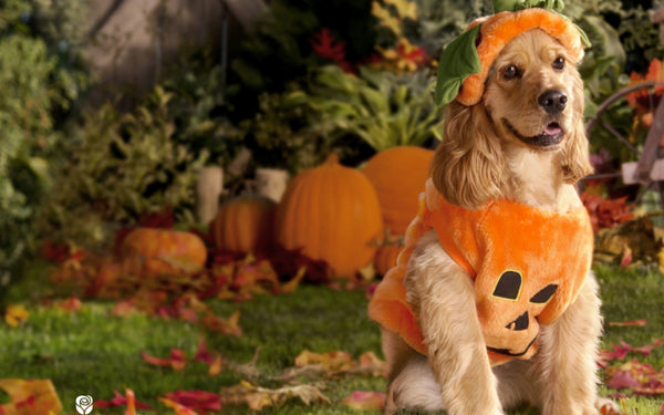The Best Dog Costumes Online for Halloween 2020